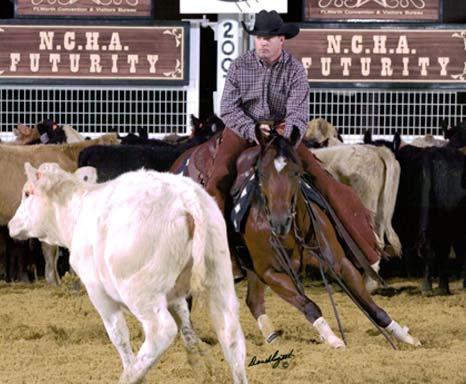 http://www.jomm-ranches.de/kittycowsmart.jpg